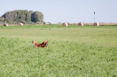 Field-3