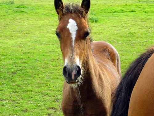 Foal 01