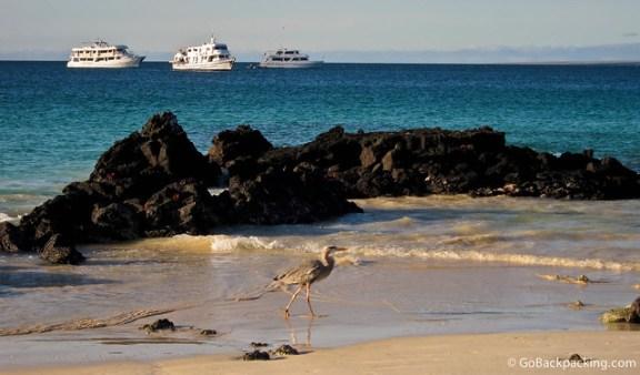 A heron walks along the beach at sunset