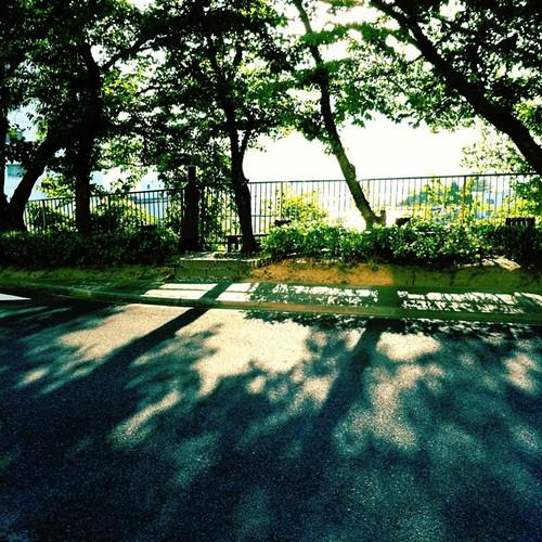 木漏れ日の中で… #iphonography #instagram