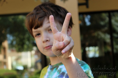 365 day 231 - Peace.