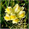 Wildflowers in Yellow by Stella Blu