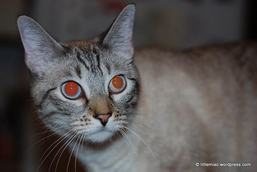 chun imp eyes 10-9-2011 5-41-18 PM
