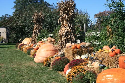 Glorious pumpkin display
