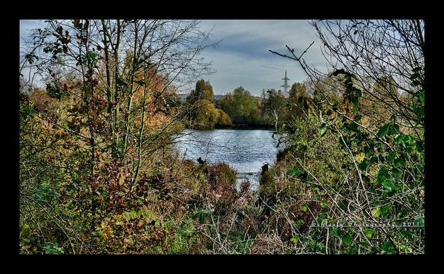 #310/365 Lake View