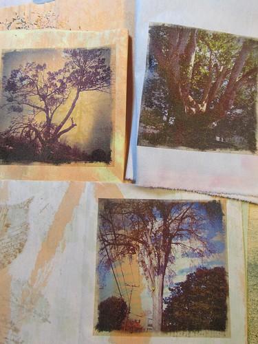 portraits; elm, oak, sycamore