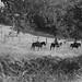 Paso Robles Horse Ranch 20
