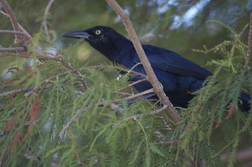 Birdwatching - 2