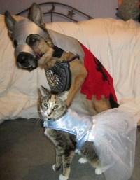 Halloween costumes! - German Shepherd Dog Forums