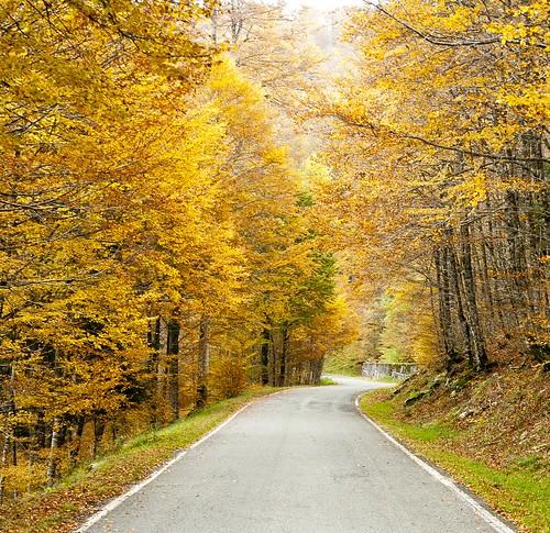 Carretera en Irati