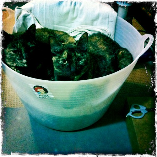 Licorice and Saffron in the washing basket