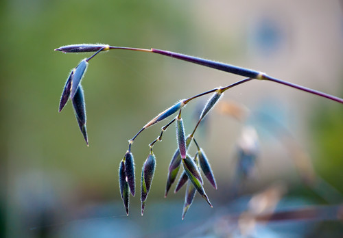 Fuzzy Seed Hang
