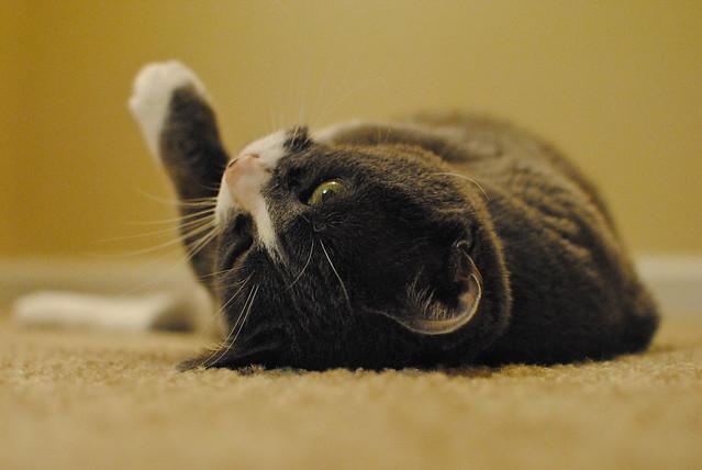 [320/365] Goofy Cat