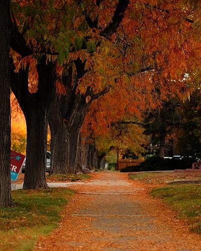 Day 1 -- My Neighborhood