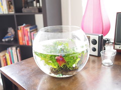 Fishbowl, L'etoile Cafe, Owen Road, Little India
