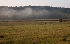 wisps of morning fog