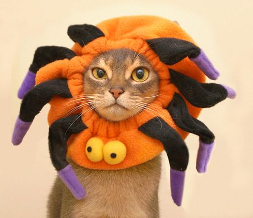 Halloween_Racy_1