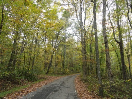 Leaves Changing in Mentone
