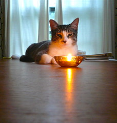 Kitten trataka