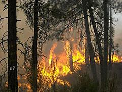 Wildfire burns in Eastern Washington