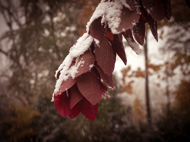 FirstSeasonsSnow_20111027_4276