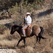 Paso Robles Horse Ranch 10