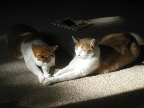cats with paws angled towards each other