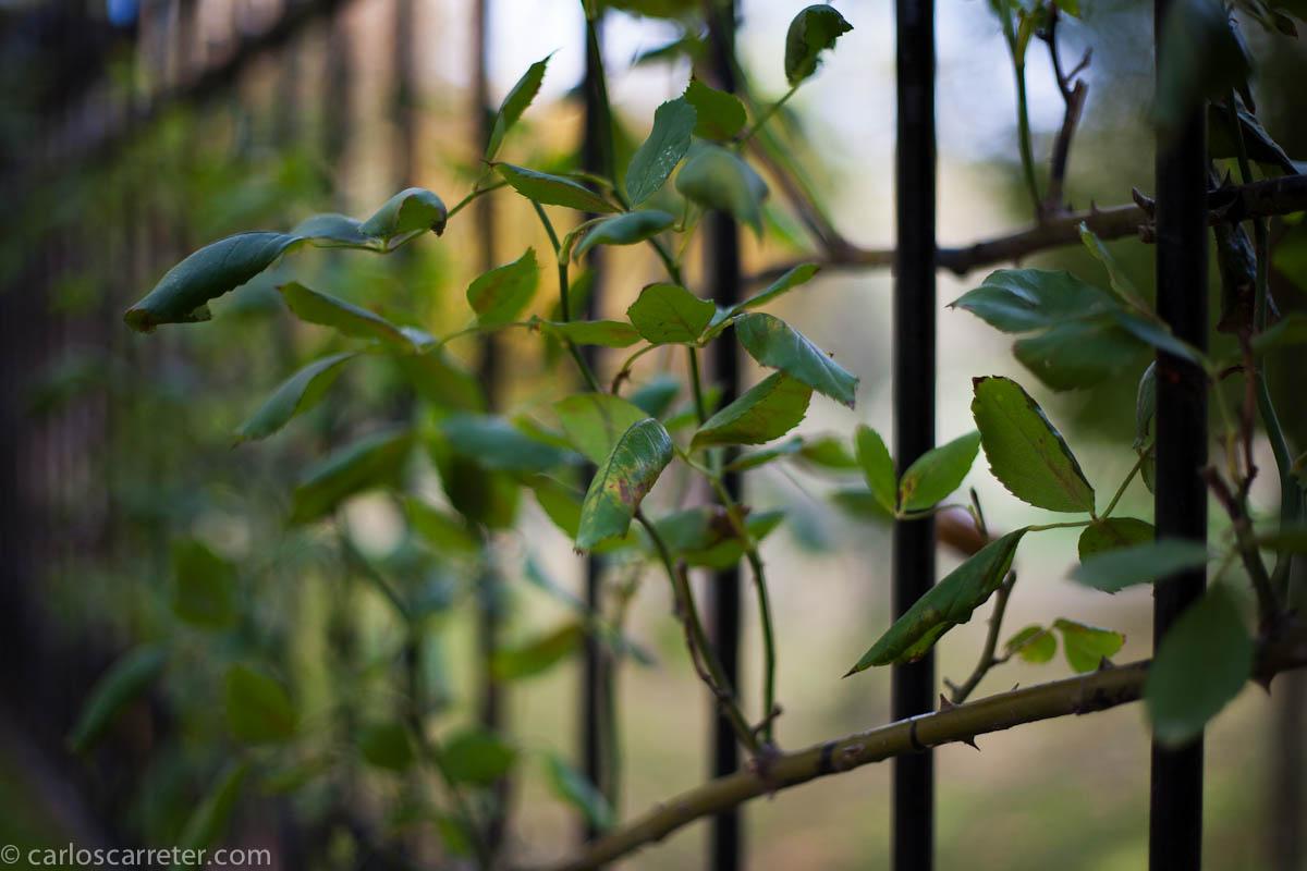 En las verjas del botánico
