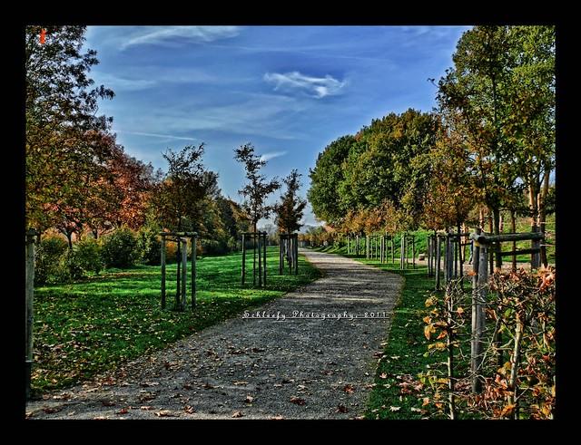 #307/365 The Park