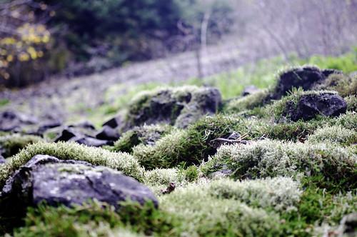 ubiquitous mossy rocks