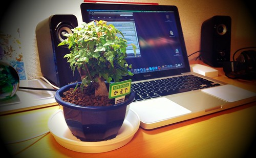 Bonsai!!! by G e o cycle