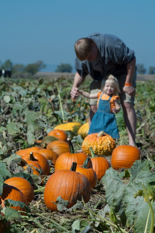 2011 - October - Pumpkin Patch