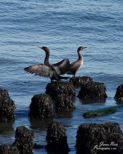 A pair of waterbirds relax along the shore.