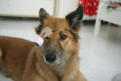 eyeball eyepatch
