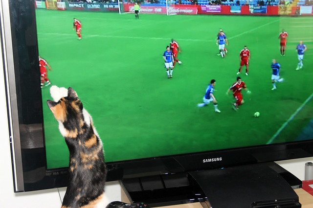 Maeby likes TV