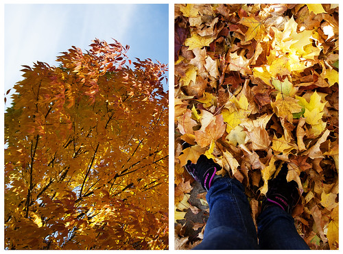 diptych - fall in oregon