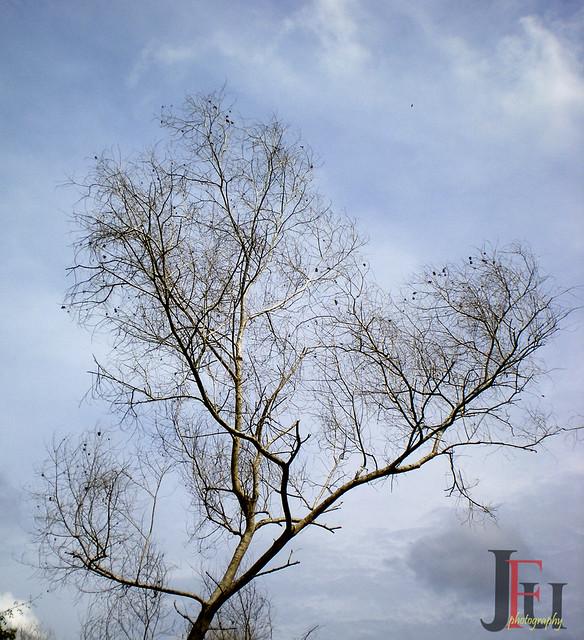 pohon #1