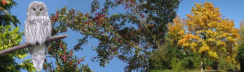 Herbst-Header ohne Lampionblume