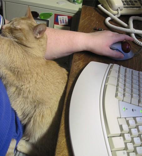 Cat Computing 1