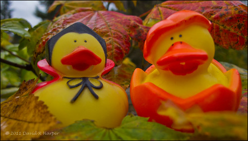 Day 303 :: 365 ..::.. Duck-o-Lantern and Friend by Echo9er