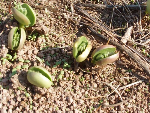201110150073_seedlings