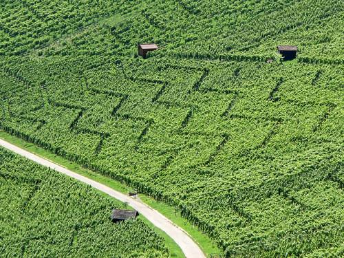 Zig-Zag in the Vineyard