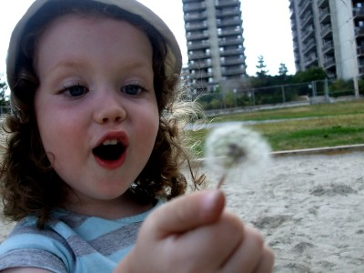 dandelion fluff!