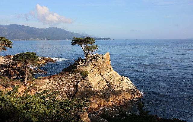 Lone Cypress Tree, 17 Mile Drive, Monterey CA