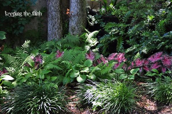 caladium and hosta berl's garden