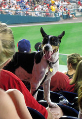 Pups in the Park at Nationals Park