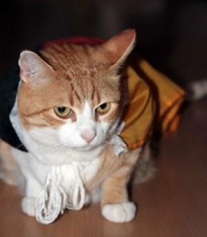Celebrating the Hero Cat - Bat-Cat