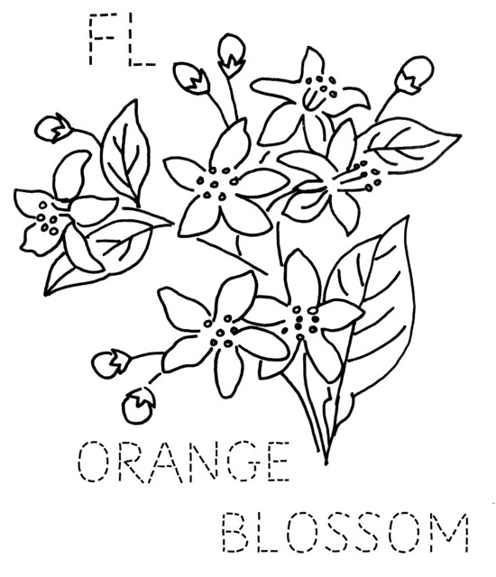 orange orange blossom Colouring Pages