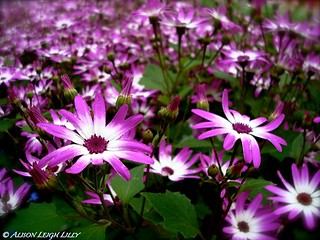 Purple Wildflowers