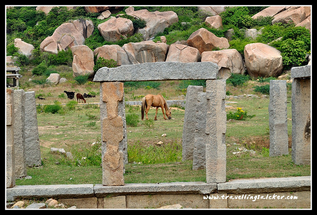 Hampi: Horses near Vittala Temple